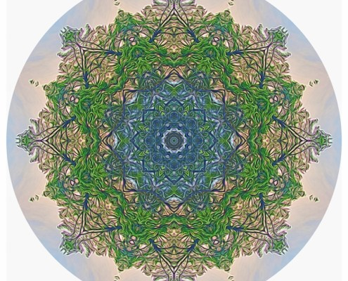Reflections in the Pines Mandala - Beth Sawickie