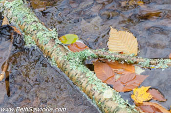 Leaves in water at Ricketts Glen, PA by Beth Sawickie http://www.BethSawickie.com/our-ricketts-glen-adventure