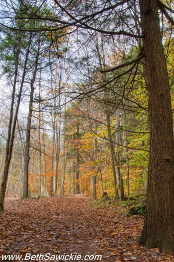 Lower Trail in Fall at Ricketts Glen, PA