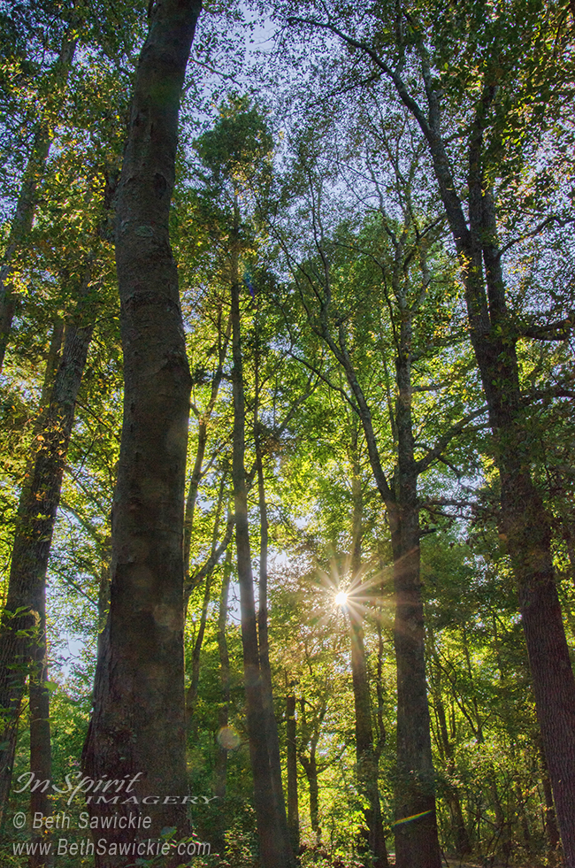 Sunburst Through the Trees by Beth Sawickie http://www.BethSawickie.com/sunburst-through-the-trees #sunburst #sunset #starburst #forest #whitesbogvillage #newjersey