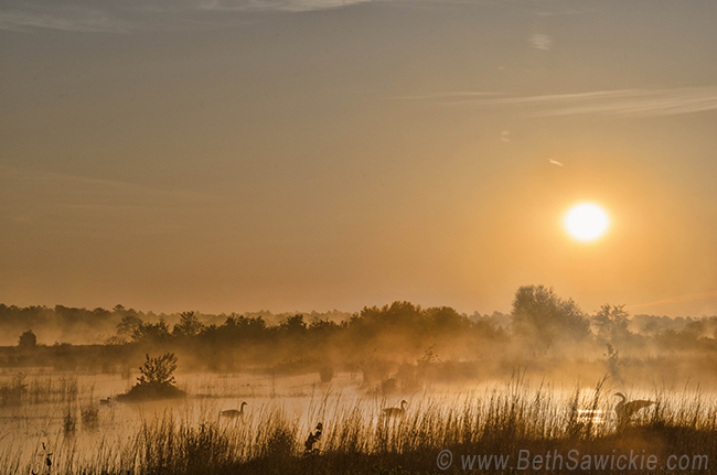 Sunrise with the Geese at Whitesbog by Beth Sawickie http://www.bethsawickie.com/sunrise-with-the-geese