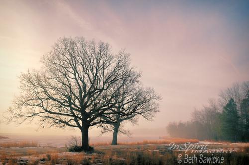 "Image by Beth Sawickie - http://www.BethSawickie.com/tree-sunlight-fog ""Tree Sunlight Fog"""
