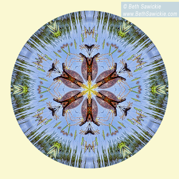 Red Bellied Turtle Mandala by Beth Sawickie http://www.bethsawickie.com/red-bellied-turtle-mandala