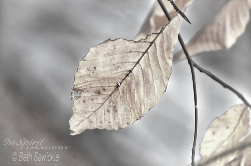 """Image by Beth Sawickie - http://www.BethSawickie.com/weathered-remnant-of-summer """"Weathered Remnant of Summer"""""""