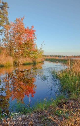 Fall Scene at Whitesbog by Beth Sawickie http://www.BethSawickie.com