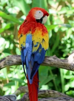 The beautiful Parrot, Bali Bird Park