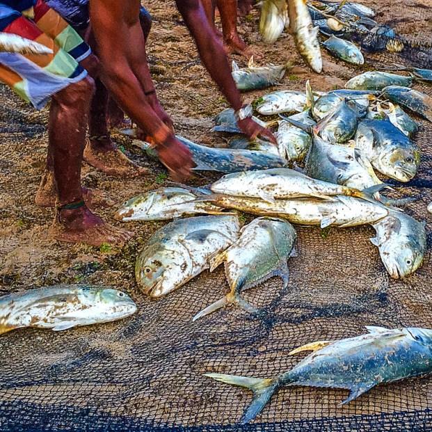 peixes_semana-santa-_bahia01