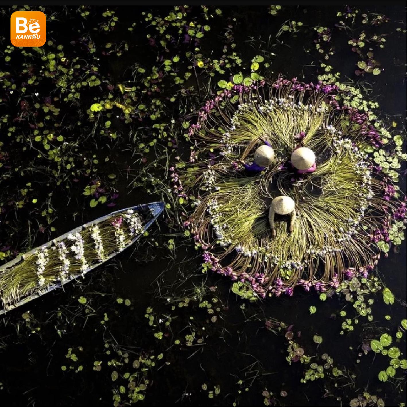 ロンアンの氾濫畑における睡蓮の季節-032