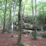 Midtåsen. Omgivande bokskog. Foto: Anita Stenler