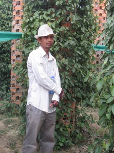 A pepper farm in Kampot