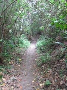 Nature trail - 1st level.