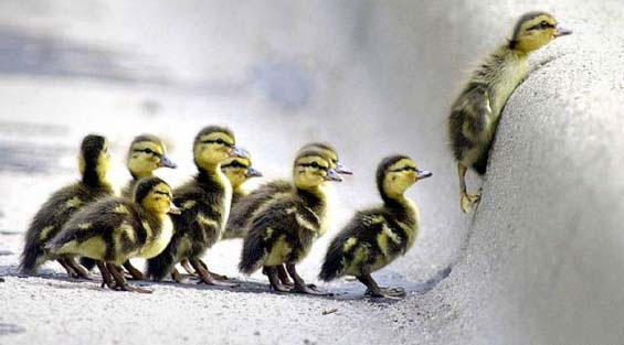 https://i1.wp.com/betsydevine.com/blog/pictures/DucklingsSnow.jpg