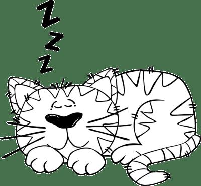animals need sleep