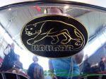 kougar emblem 003h