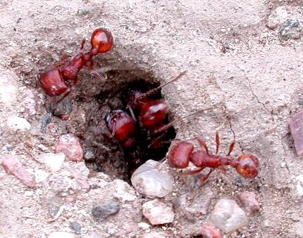 موضوع تعبير عن النمل افضل كيف