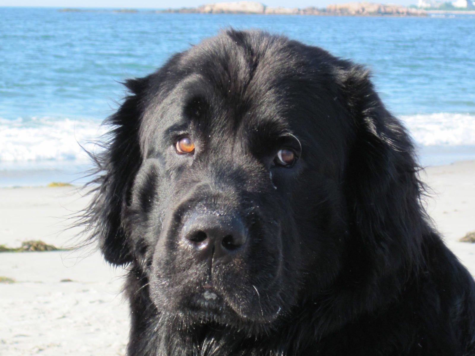 Katie Dolan Black Dog