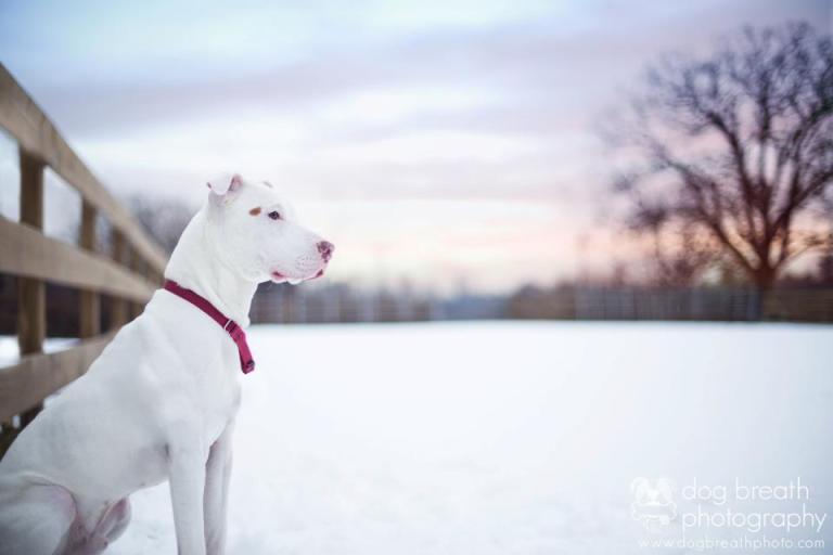 Boston Pet Photographer