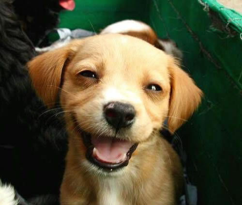 cute puppy smiling