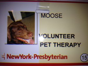 When Did You Know Your Pet Needed Therapy