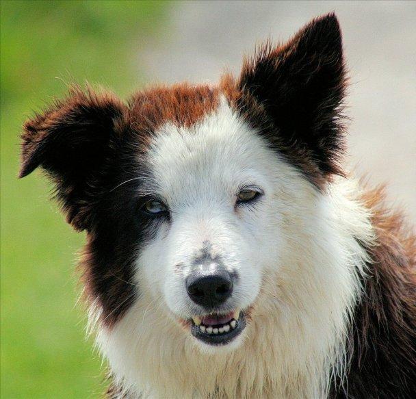 pretty dog picture