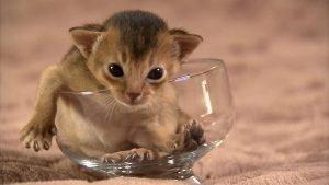 Science of Cute