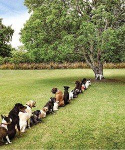 dog-line-at-tree-250x300