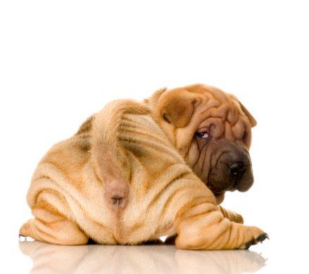 dog butt