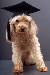 getting a master's degree at midlife