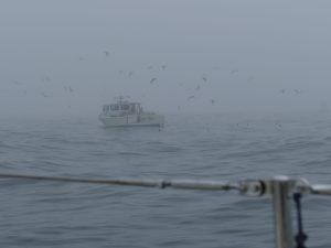 lobsterboats rule