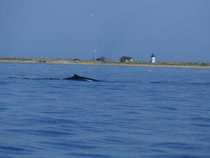 whale siting on the way out of Provincetown