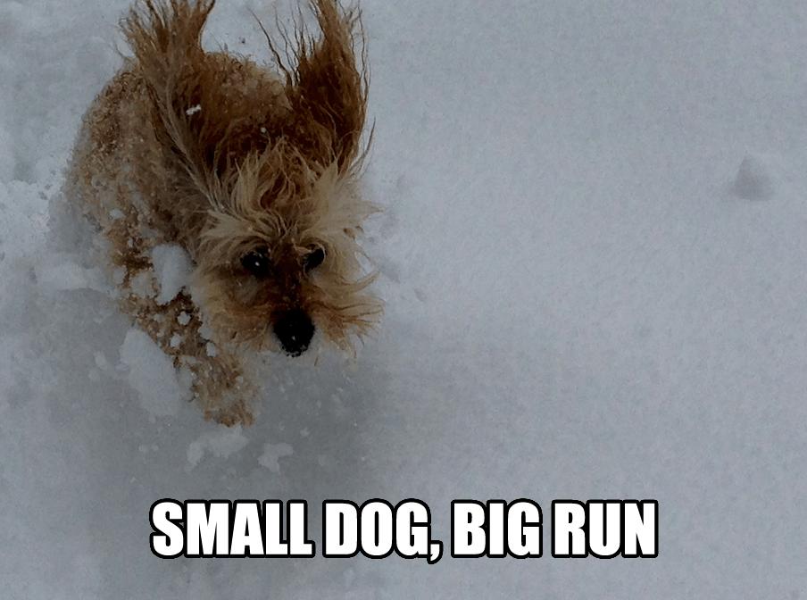 Snow dog copy