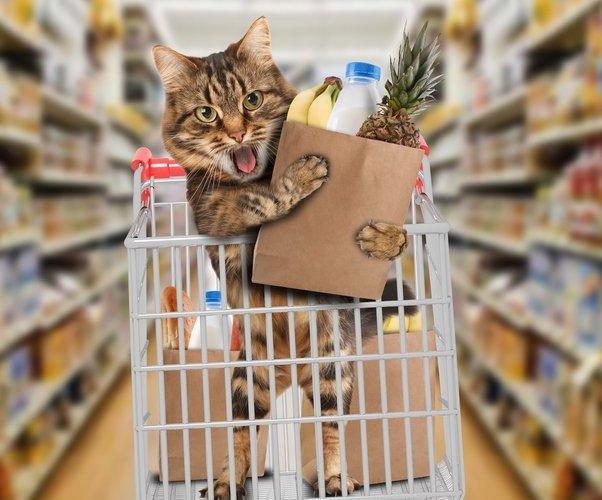stop judging my shopping cart