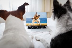 dogs watching a movie