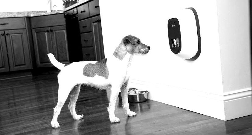 iconic-dog_600h-blackwhite