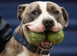 dog with balls