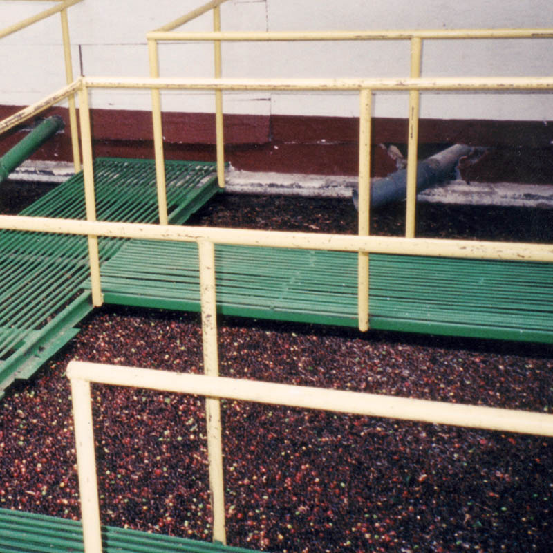 coffee processing in vats