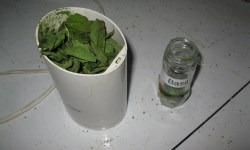 How to Quick Dry Herbs