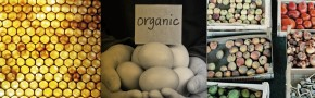 triodos bank, bank, money, sustainable, organic, better food, bristol, healthy, well being, health, finance, financial, fund