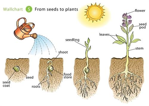 Seeds To Grow Plants And Vegetables