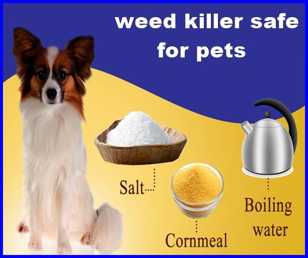 weed killer safe for pets