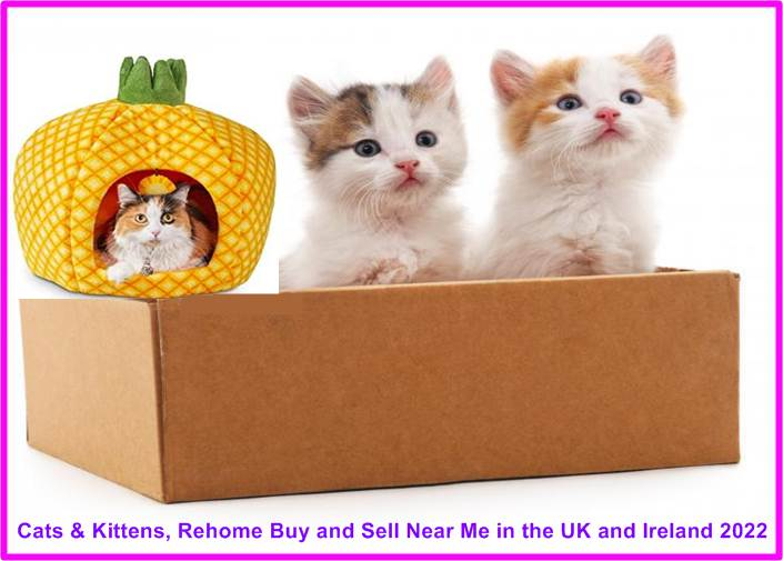 Cats Sell Near Me