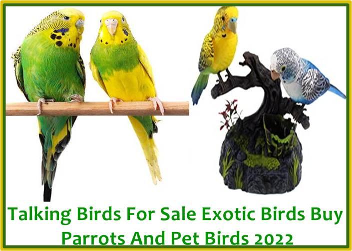 Talking Birds For Sale