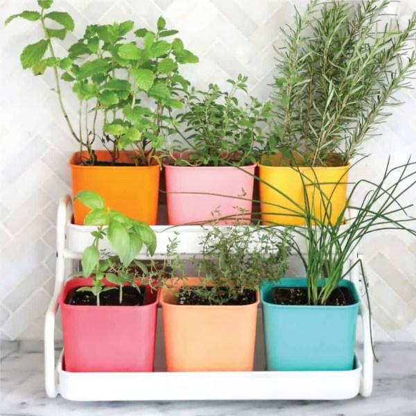 indoor herb garden Guide To Growing Herbs [ULTIMATE HERB GARDEN IDEAS]