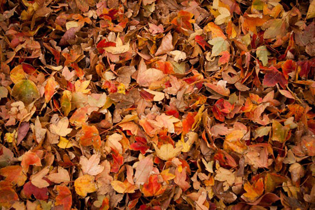 How Use Leaves Mulch