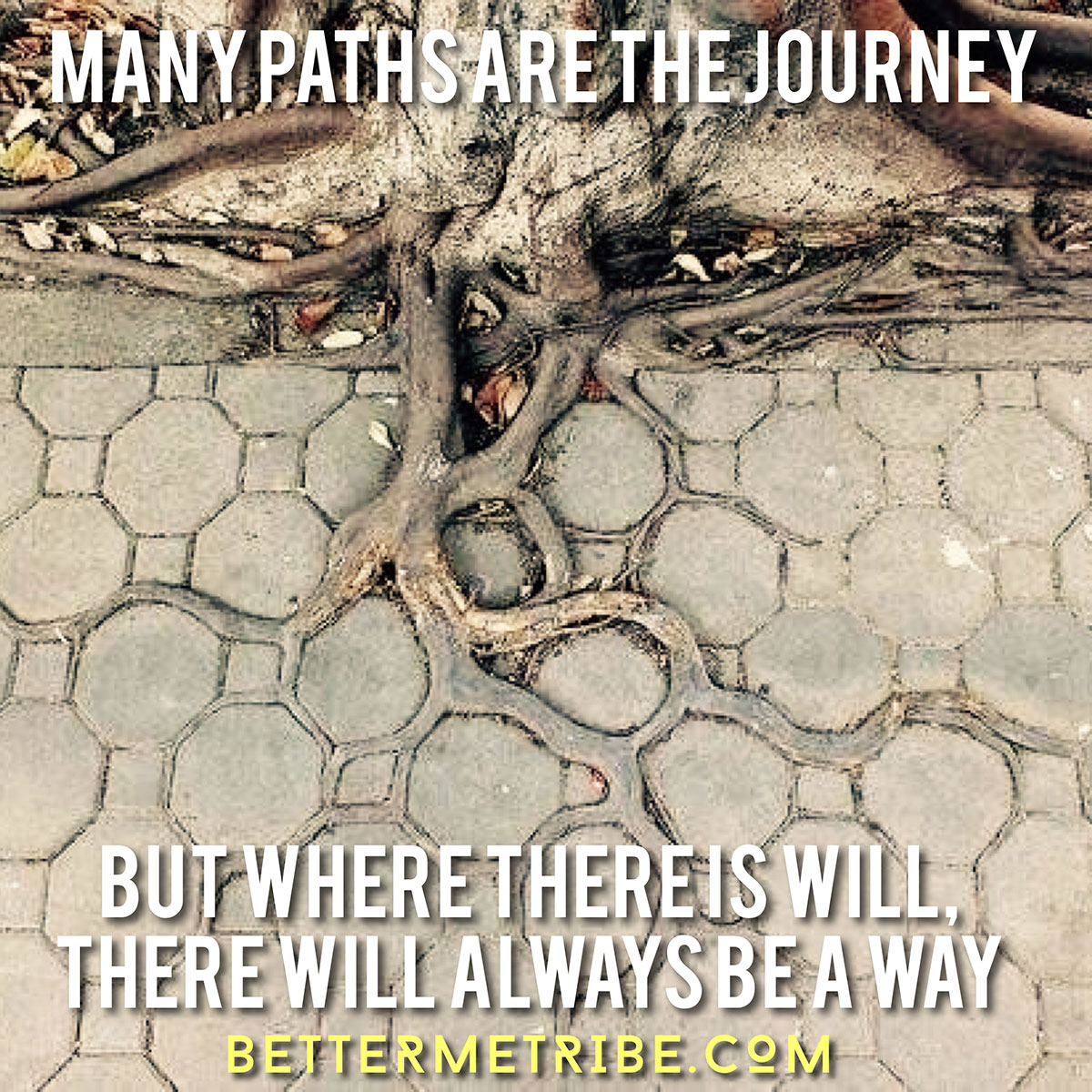 ManyPaths-Will-Web