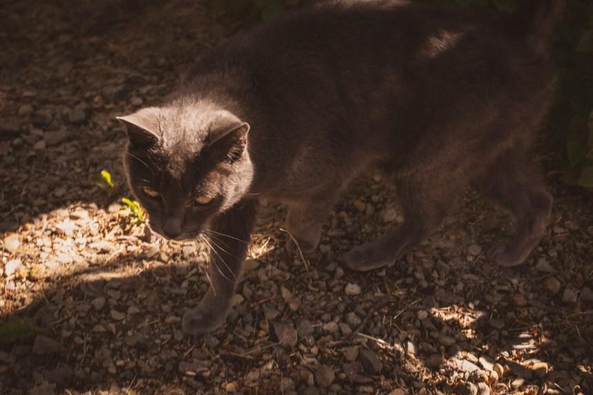 grey cat farm