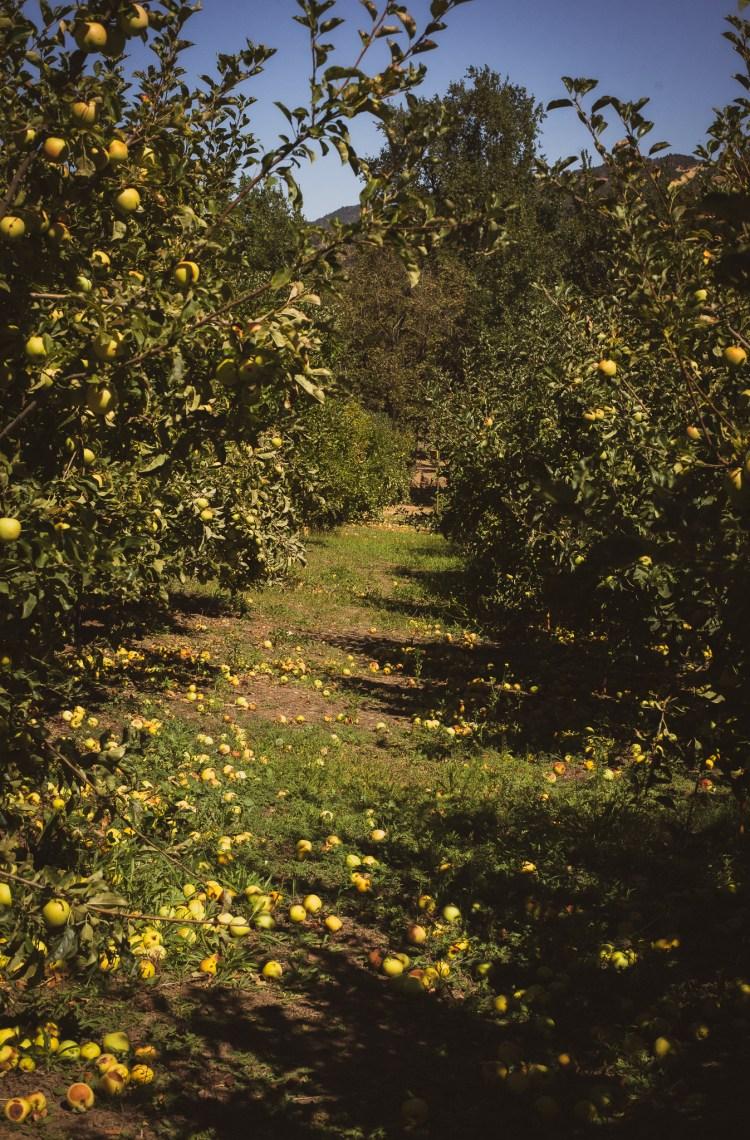 dreaming apple farm