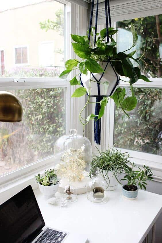 32 Office Plants You Ll Want To Adopt