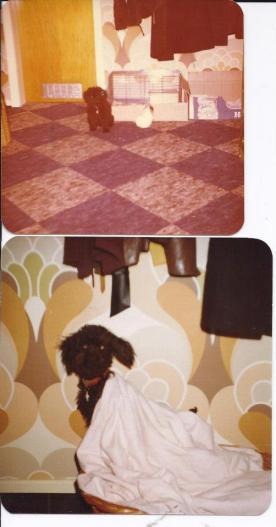 Oben Bonny mein erster Hund mit Trixi meinem Meerschweinchen und unten Timmy mein zweiter Hund