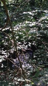 Wald2